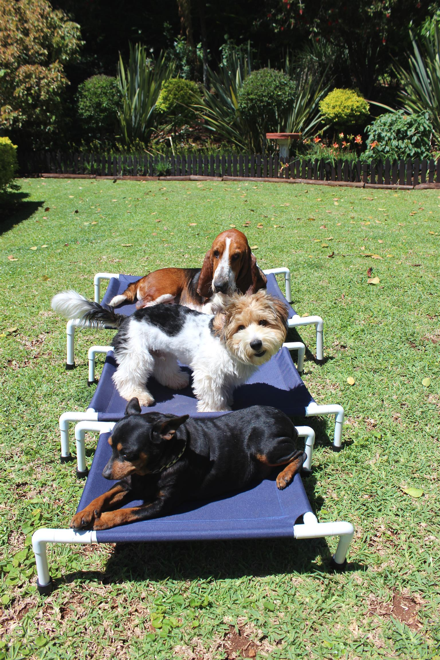 PETS LOUNGERS