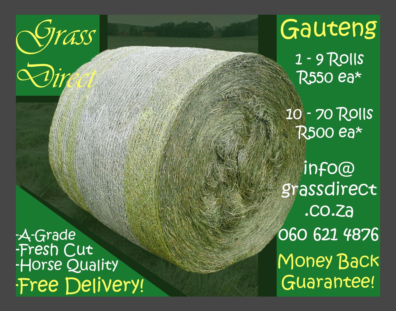A-Grade Eragrostis – Free delivery!