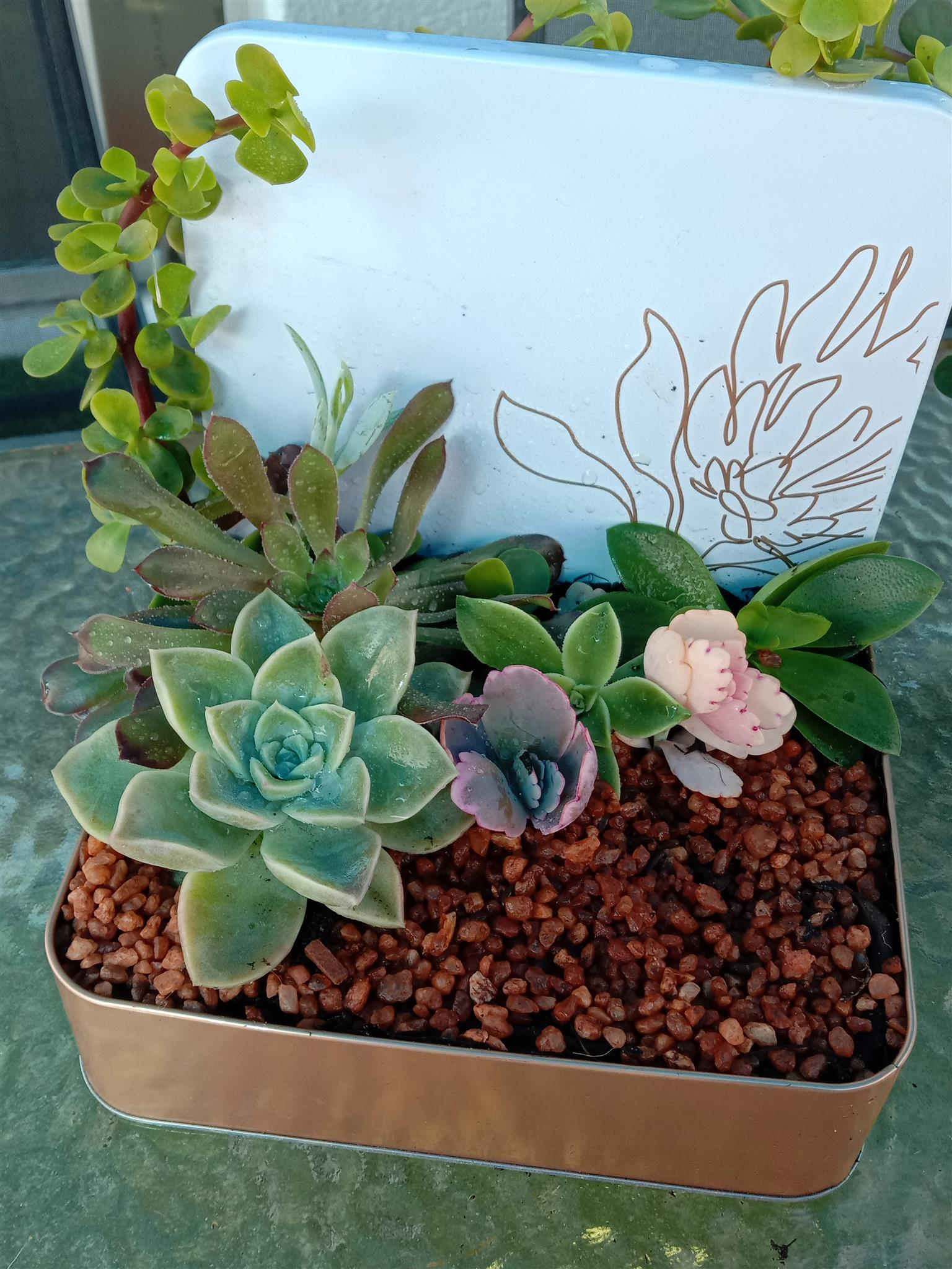 Succulents, various styles of Arrangements and much more