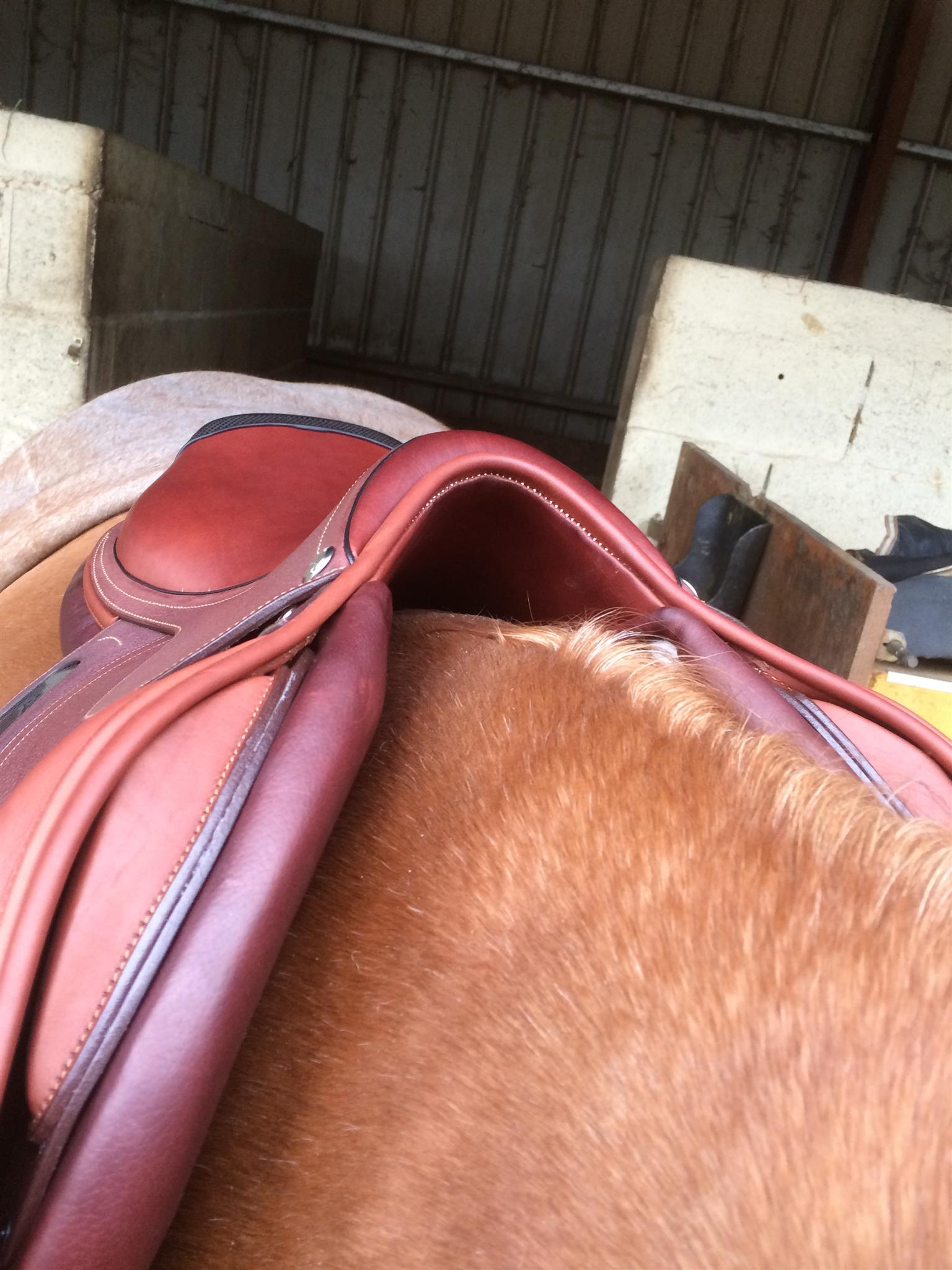 Jumping saddle CWD 2Gs