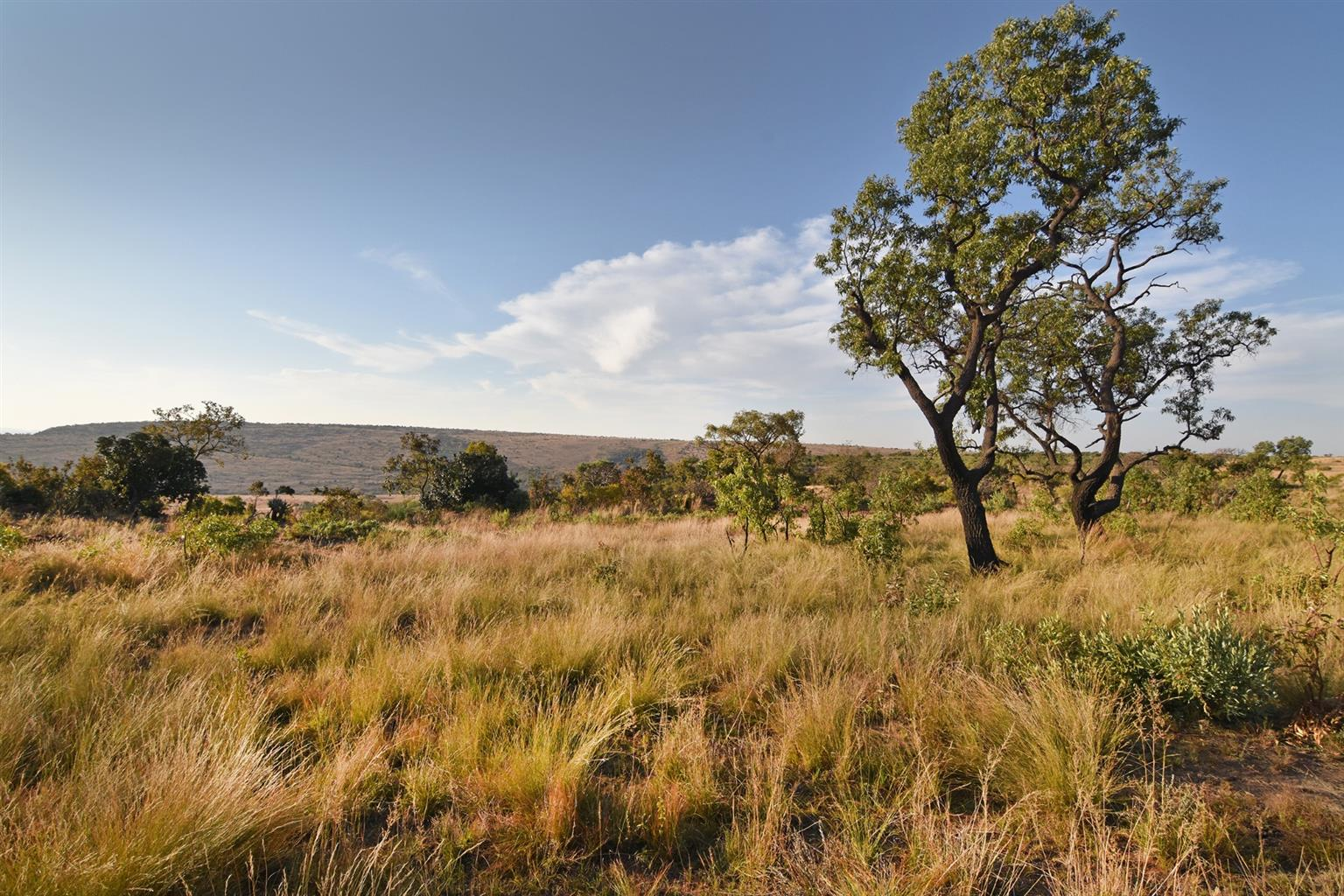 Farm For Sale in Middelburg Rural