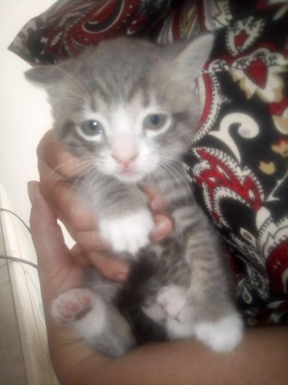 5 little kittens