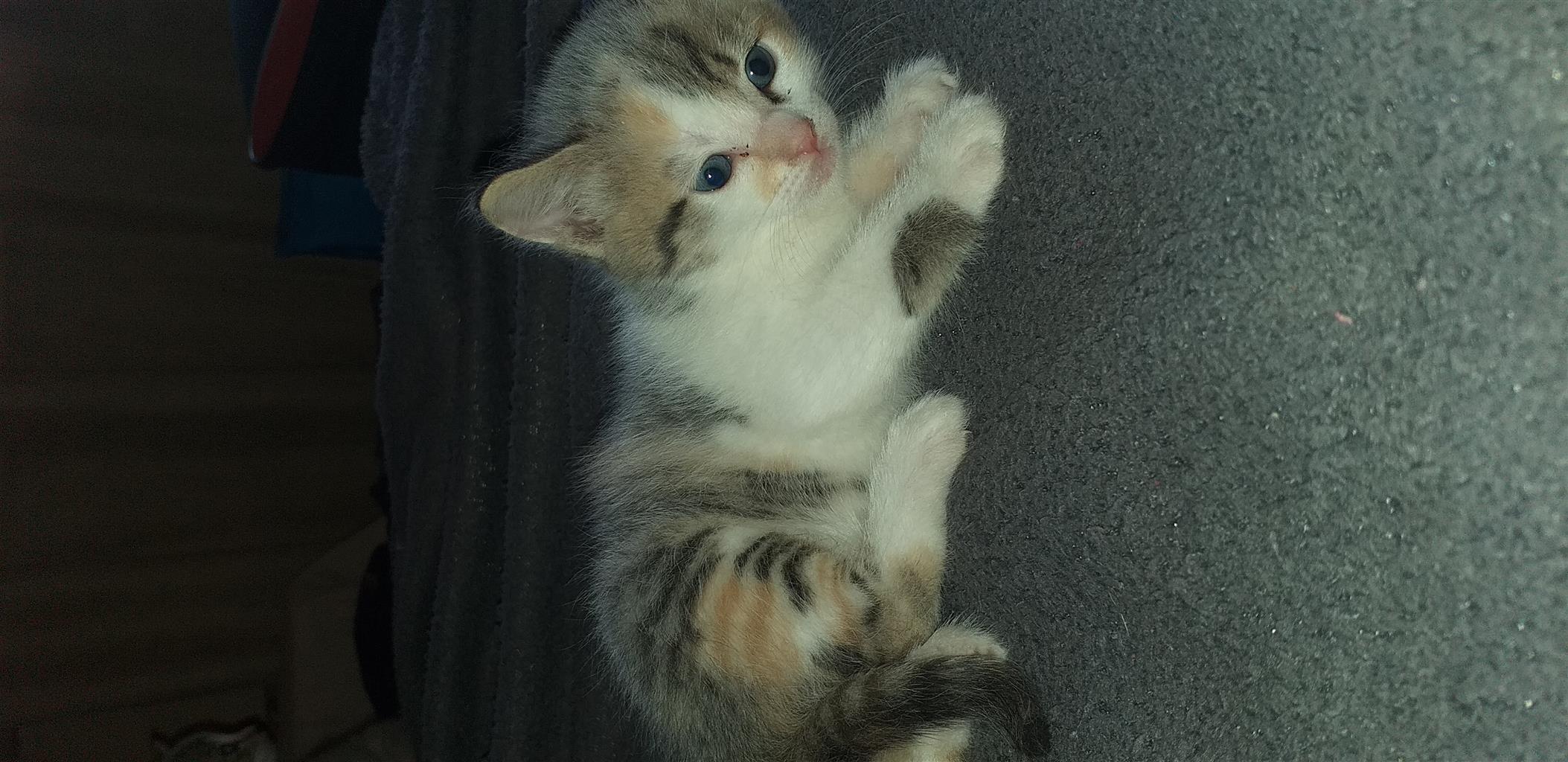 Loving Adorable Kittens