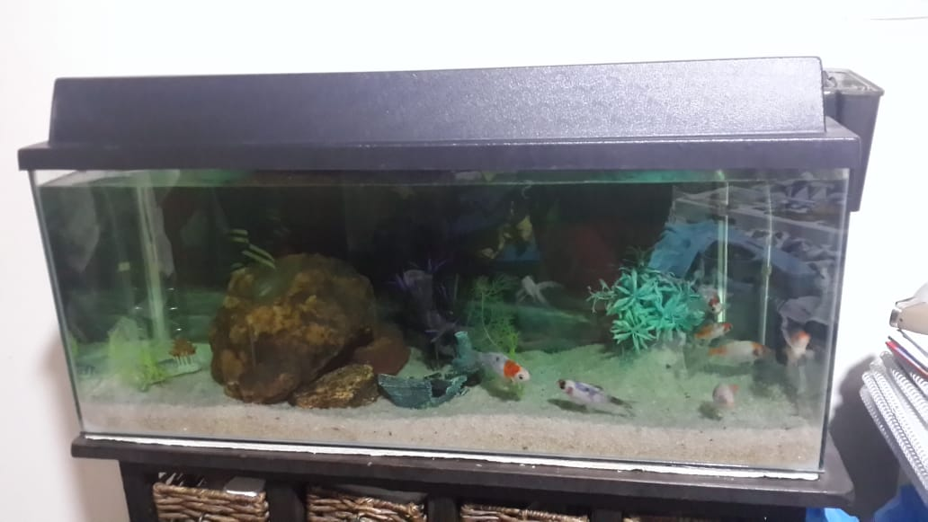 Empty fish tank & accessories