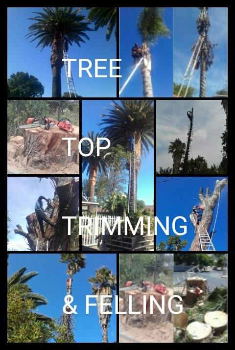 LOGICAL TREE FELLING SERVICES