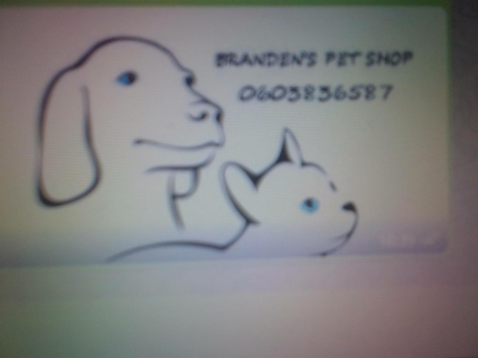 Teddy bear hamster for sale