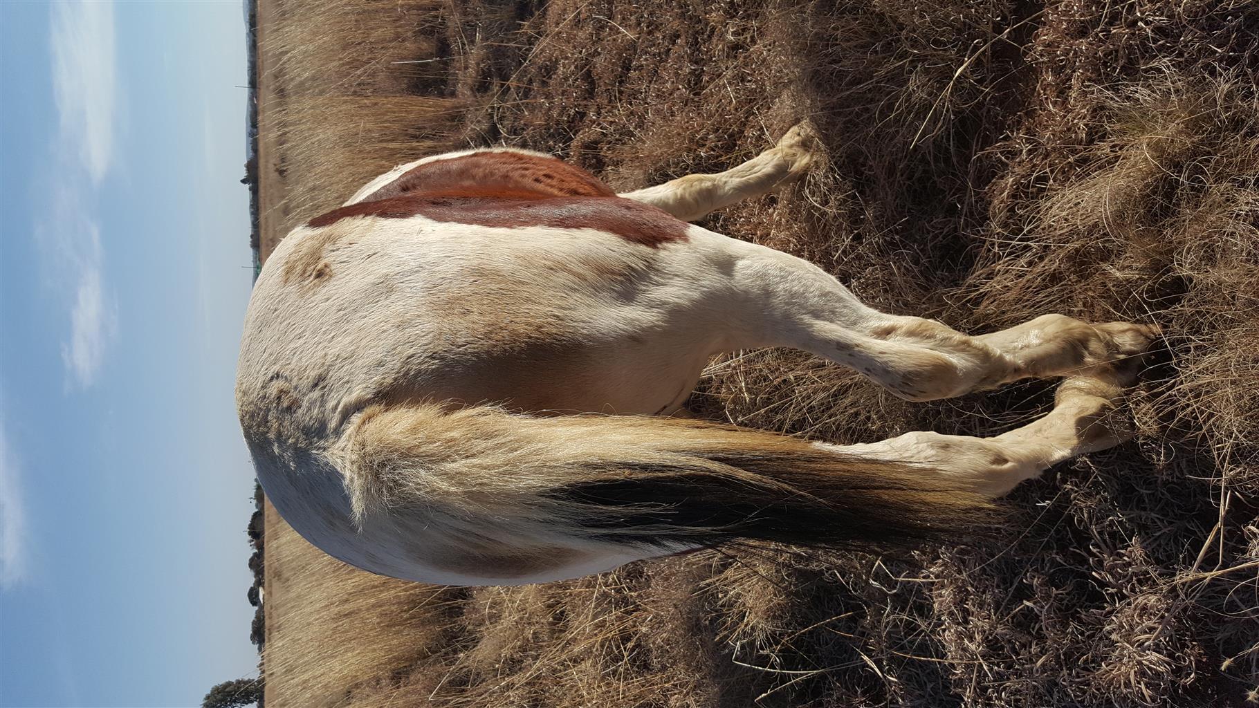 Childrens Pony
