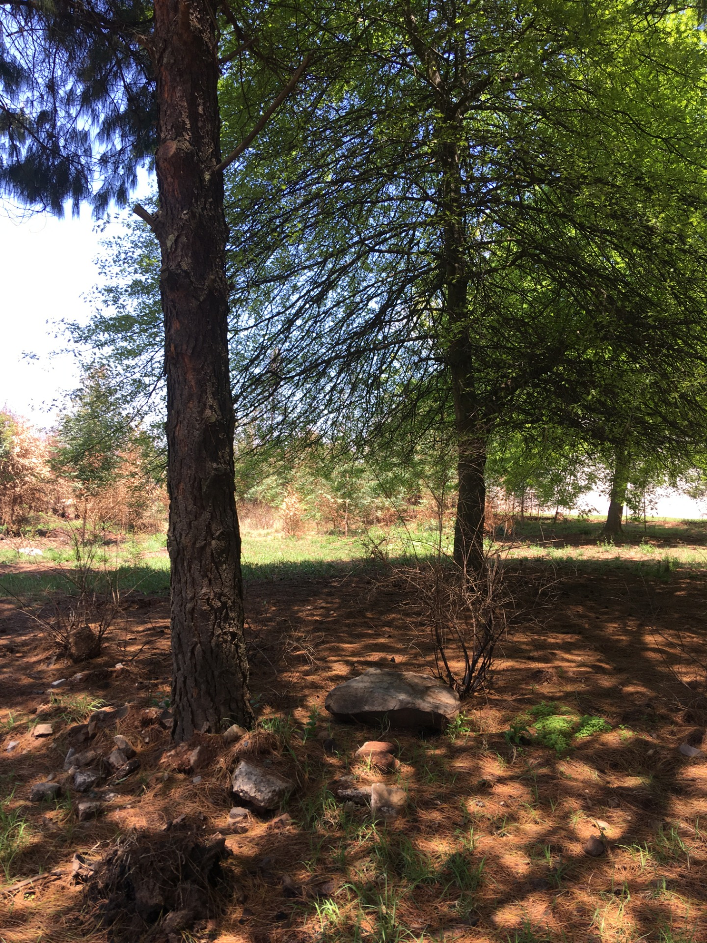 Vacant Land Residential For Sale in Dullstroom