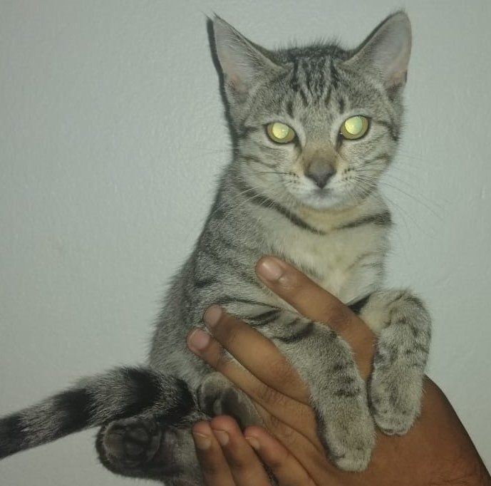 Female Kittens for Sale