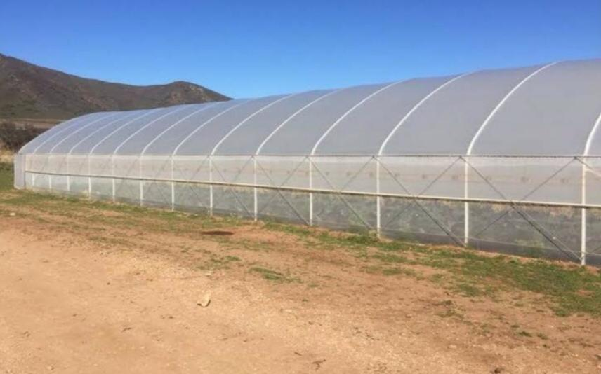 KOPIPHOGOLE GREENHOUSE AND TUNNELS FOR SALE
