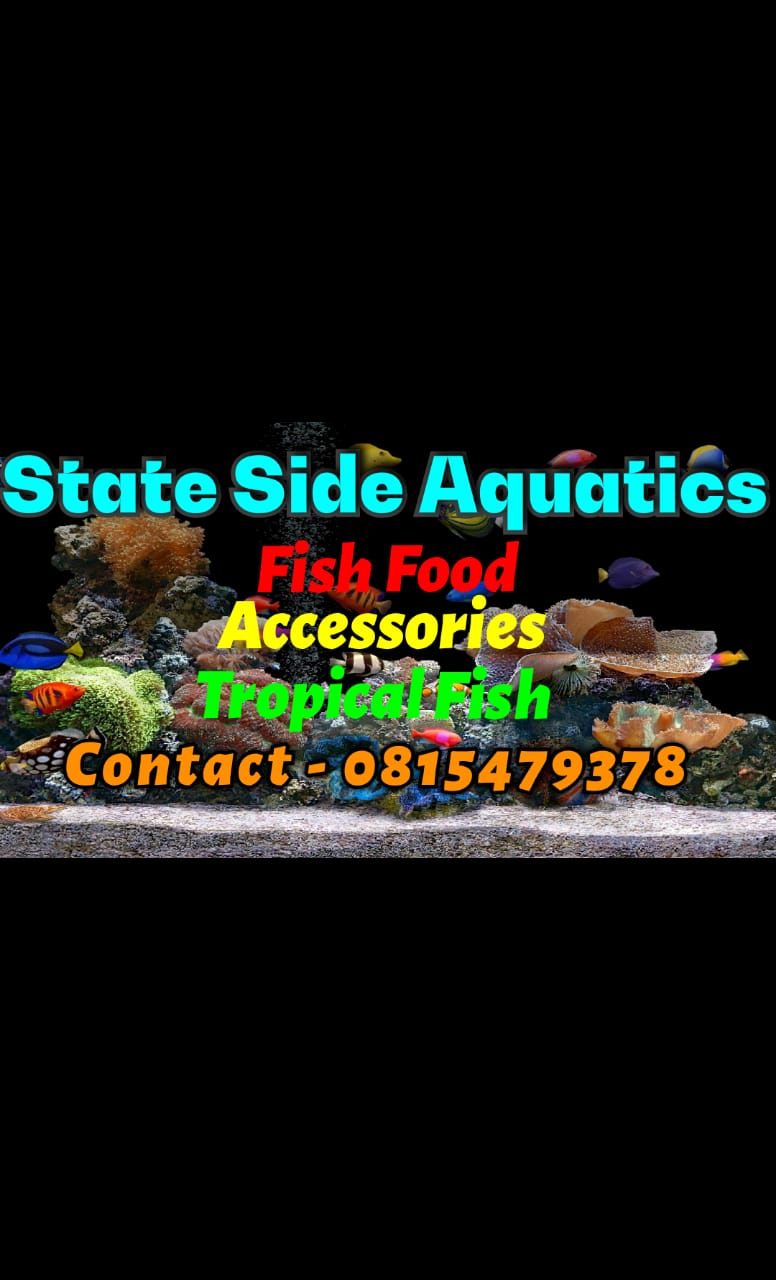 quality fish at low prices