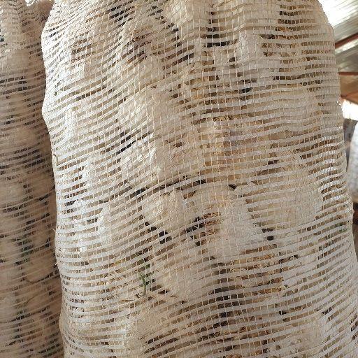 Silverleaf Garlic 10 kg seed