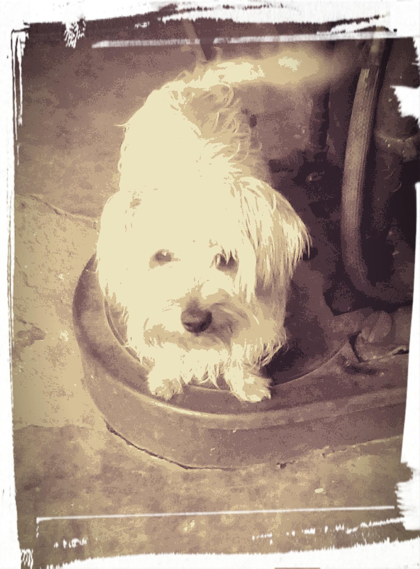 Morkese Pup