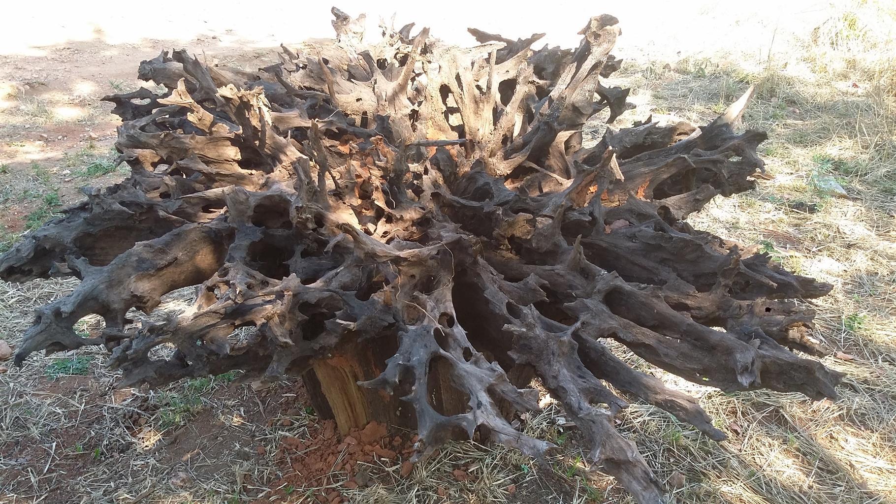 wood stumps 4 sale - Tree Stumps For Sale