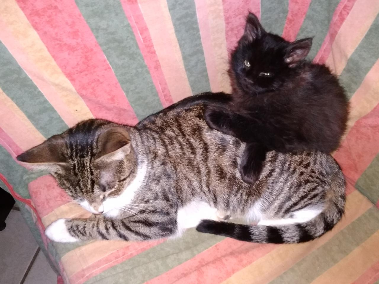 This is a story worthy of a happy ending! Meet Mamma May and her Jupiter. Another CatzRus Rescue, Foster and Re-home