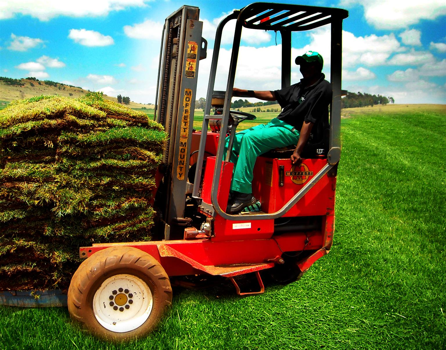 Instant lawn instant grass