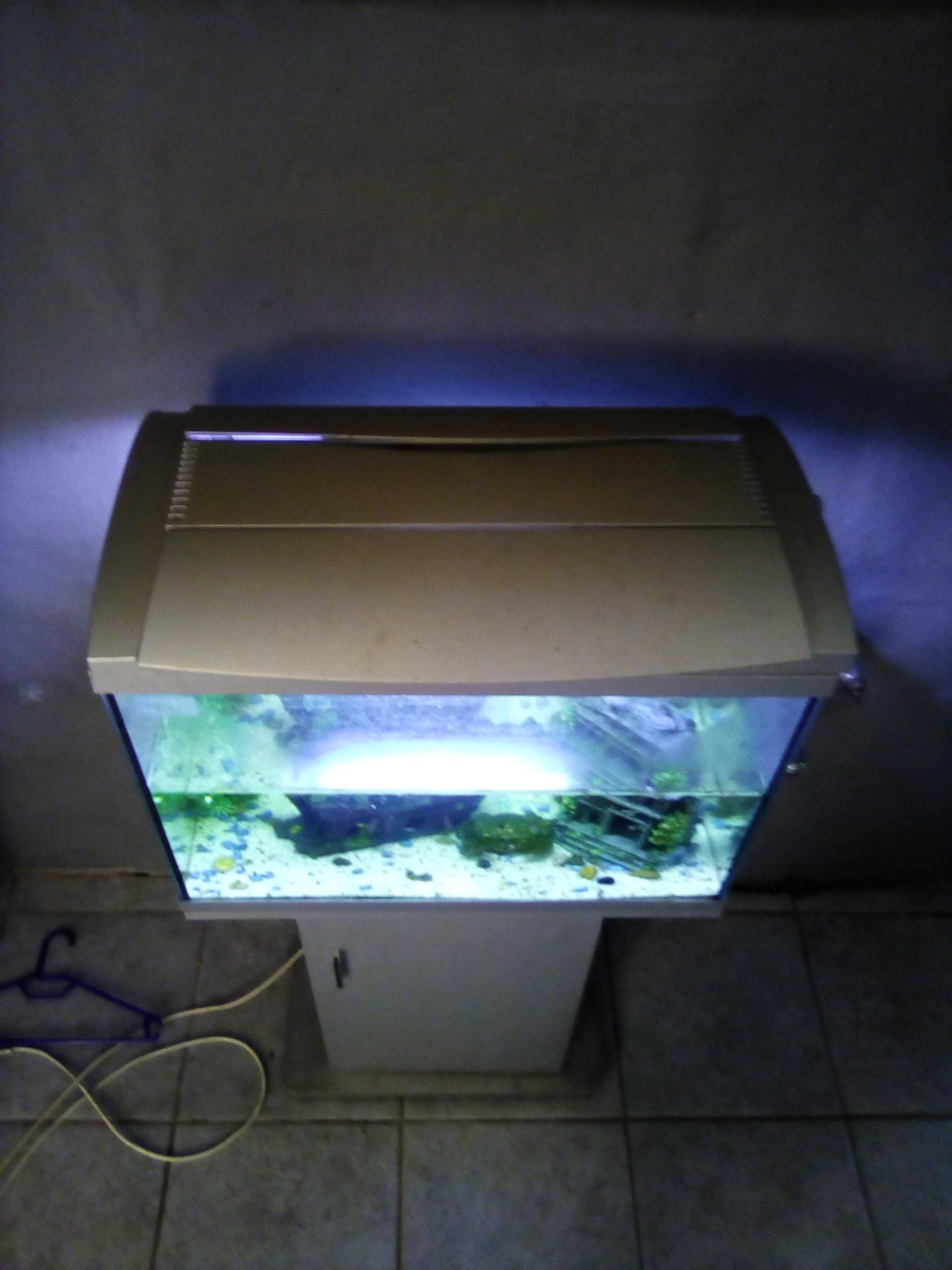 Fishtank with fish