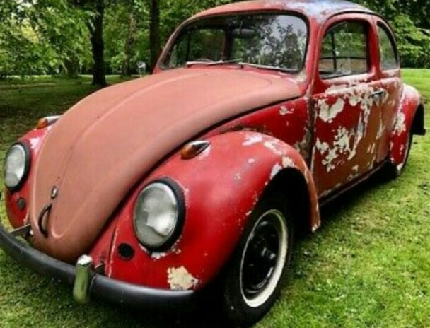 Beetle Project For Sale