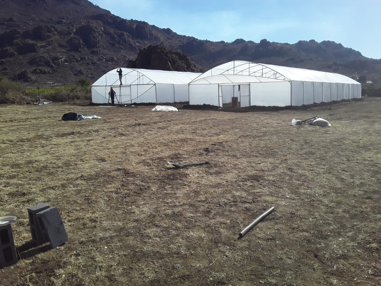 Greenhouses built from scratch