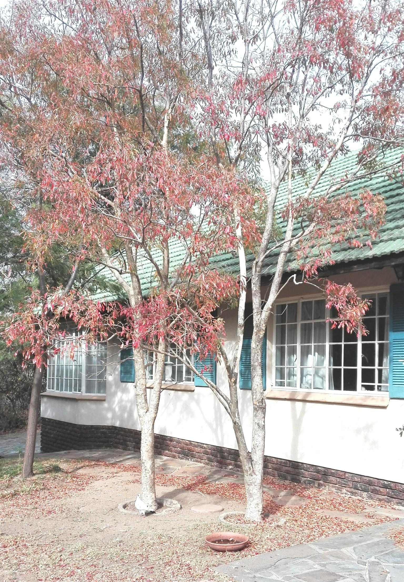 House in Bryanston area