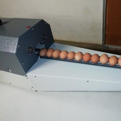 Egg cleaner, washer
