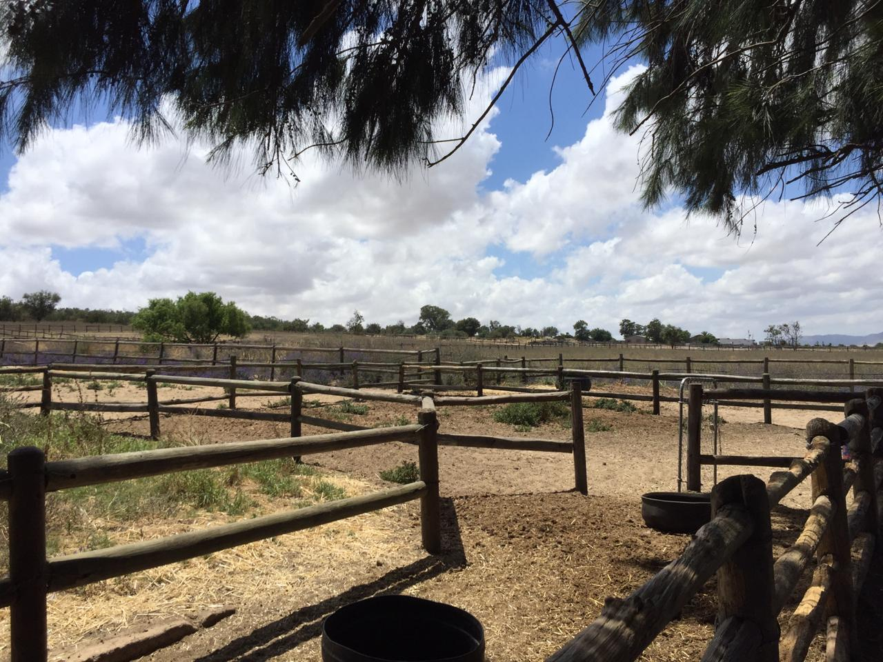 Working livery, stabling and schooling farm in Tierfontein