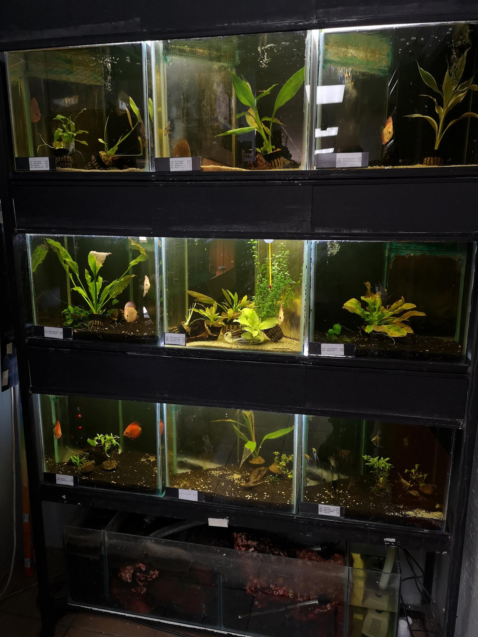 3 x Fish tank rack system