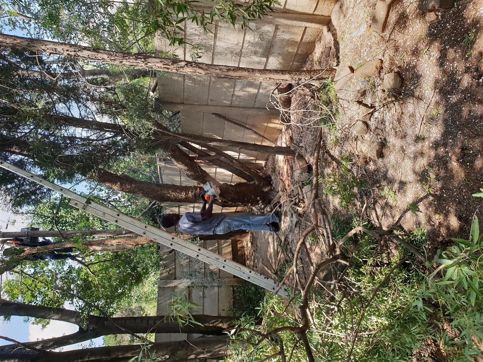 Tree felling and refuse removal