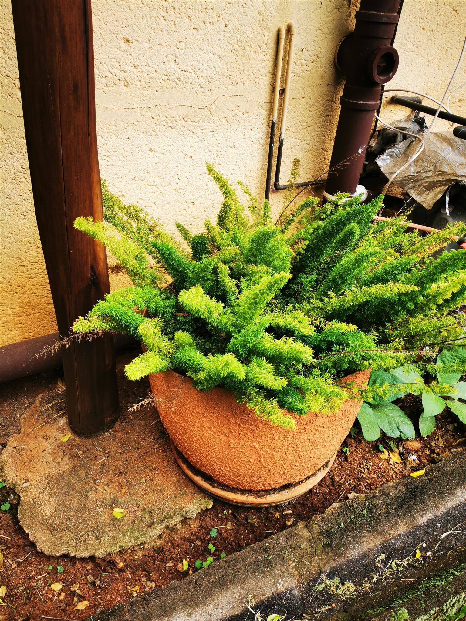 Plants, trees, shrubs, pot plants for sale