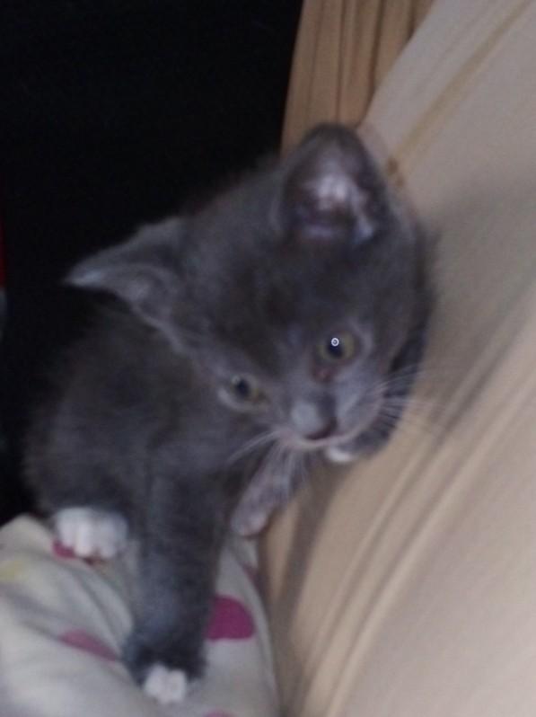 One female kitten