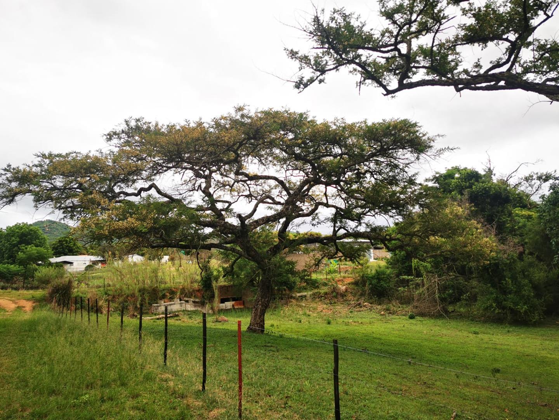 Farm For Sale in Nelspruit Rural