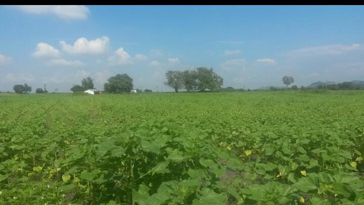 farm for agricultural