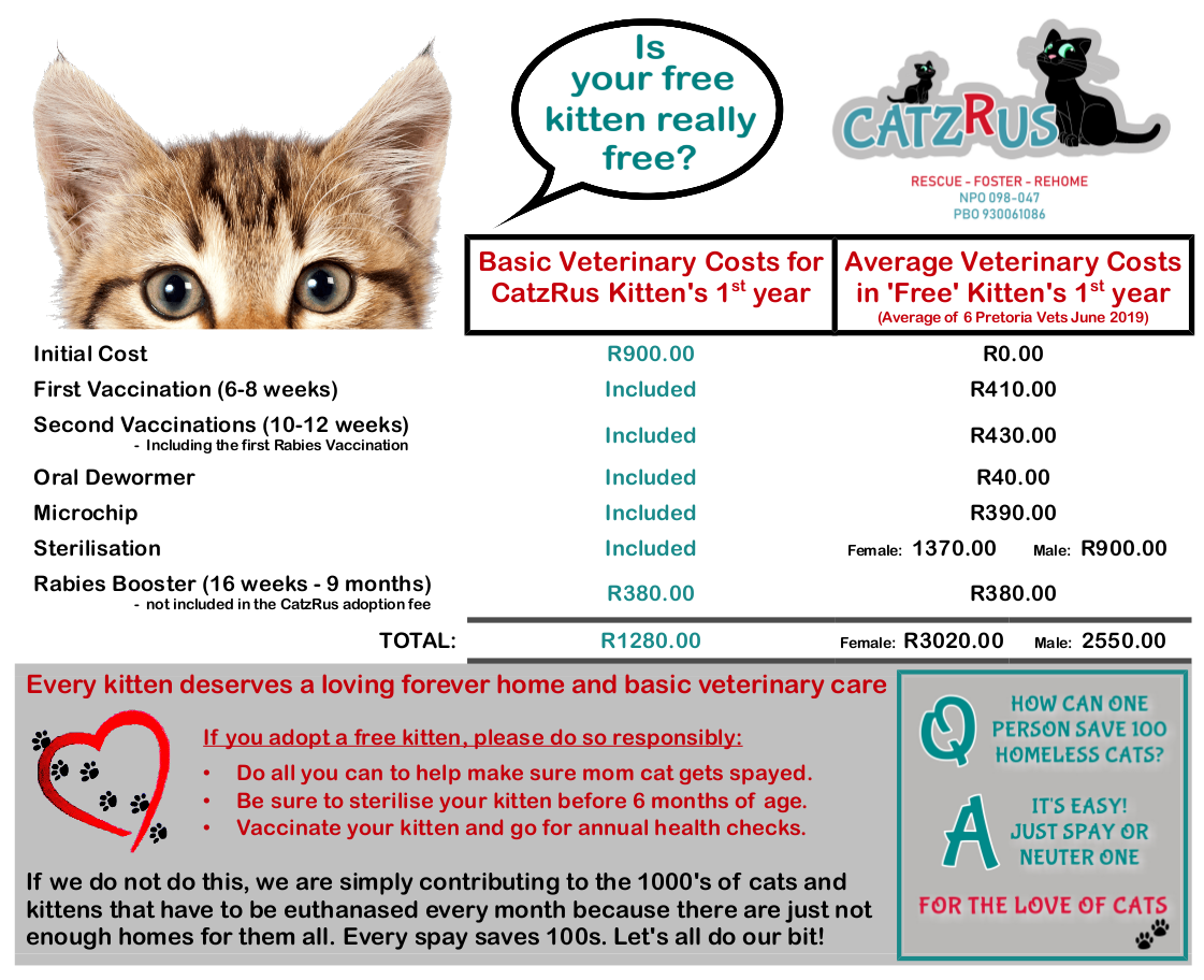 Don't get Analysis Purralysis - if you can adopt a cat or kitten PLEASE do!
