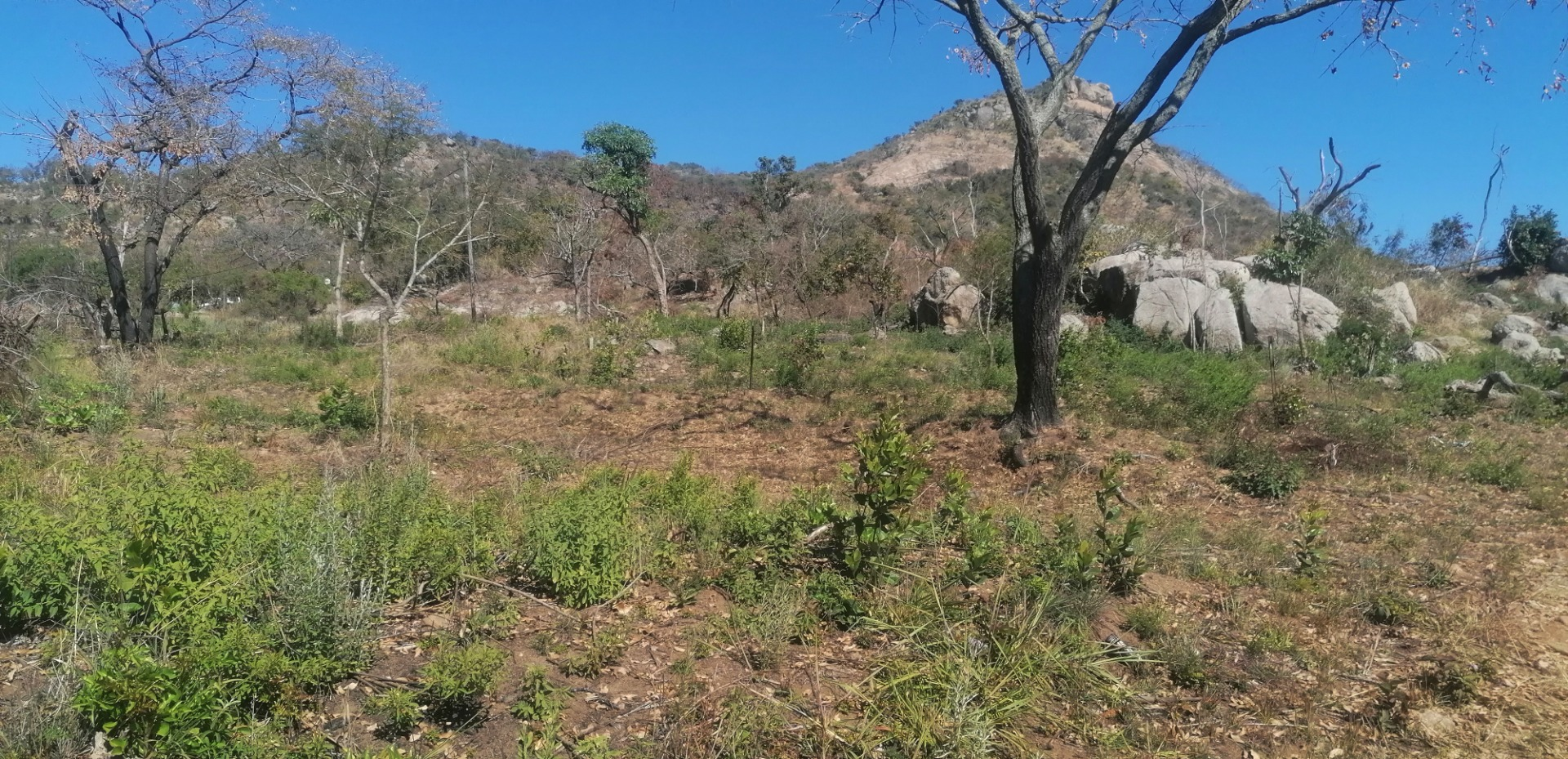 Small Holding For Sale in Renosterkop