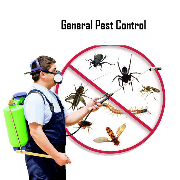 Pest Control In Boutte Mail: Central Pest Control