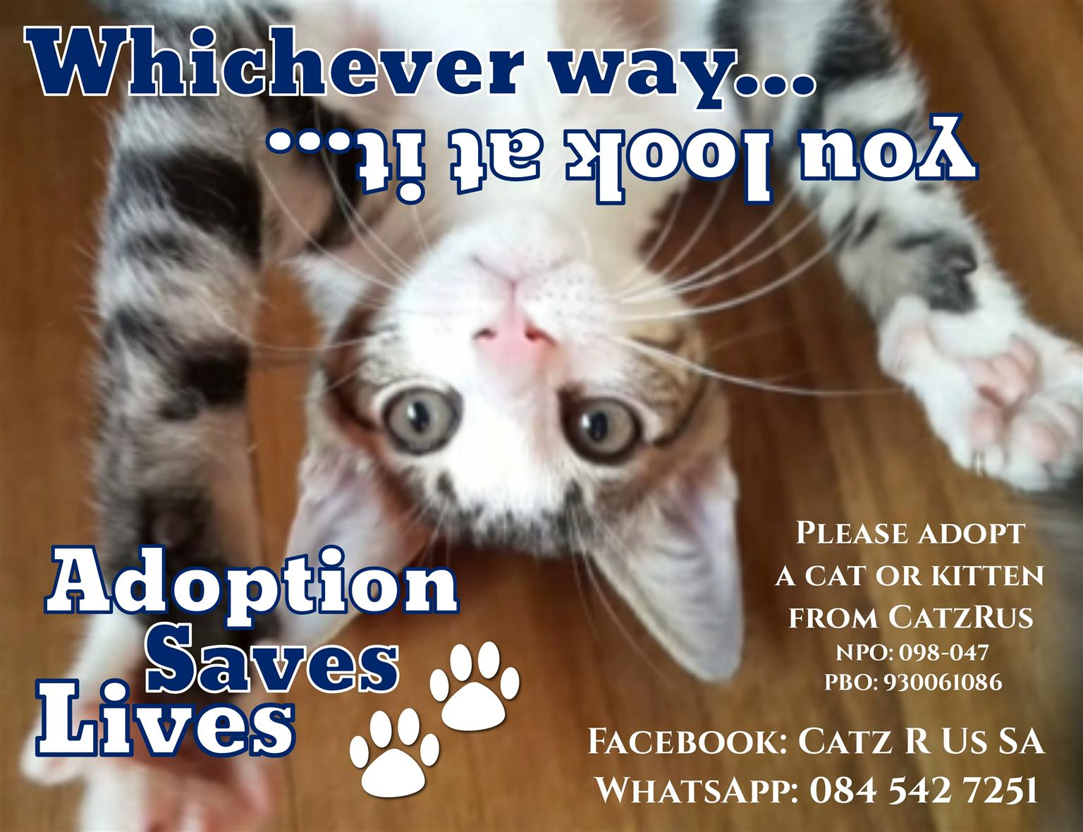 Adopt a kitten from a registered rescue organisation! Basic vet care incl. Contact us for photos.