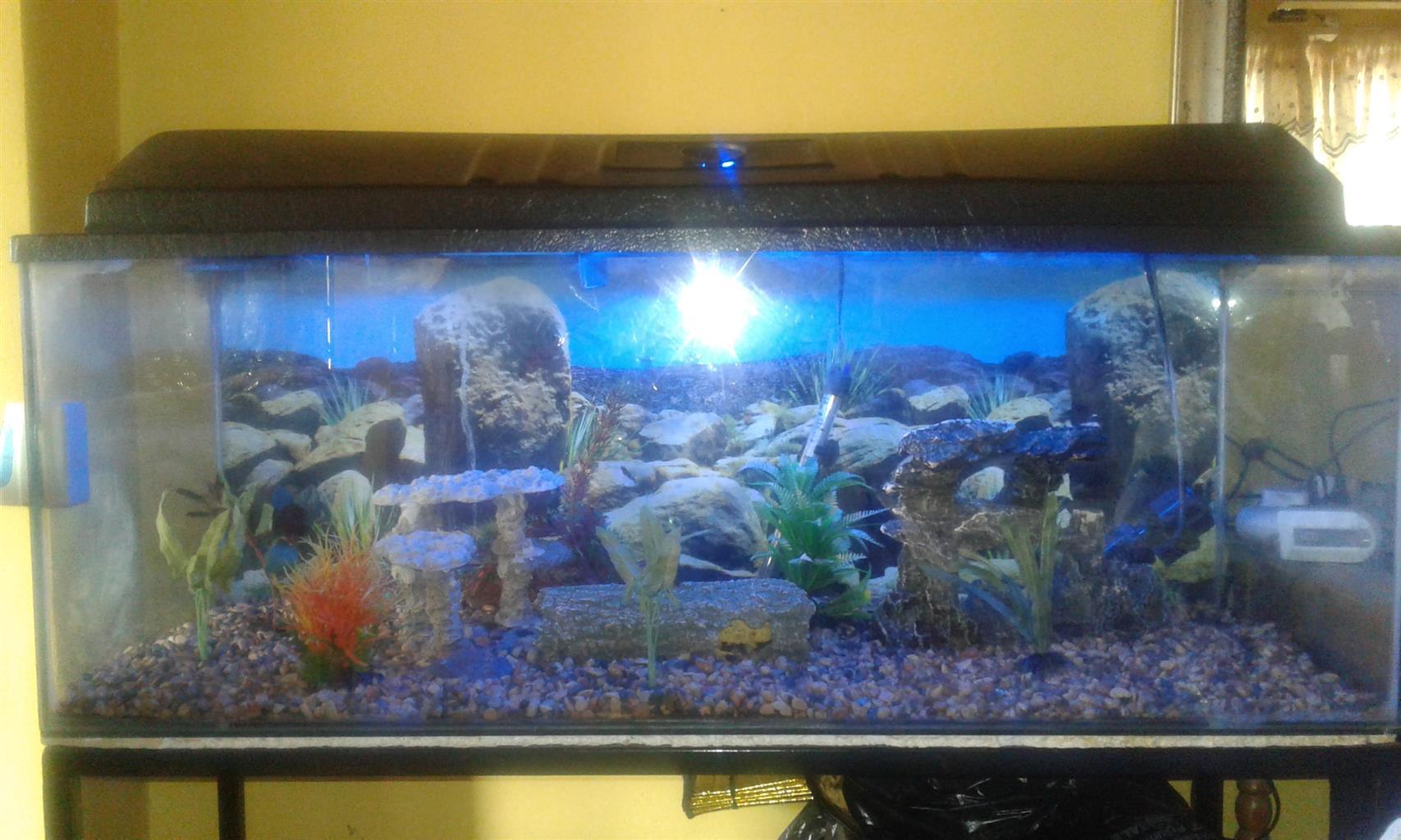 Aquarium and accessories