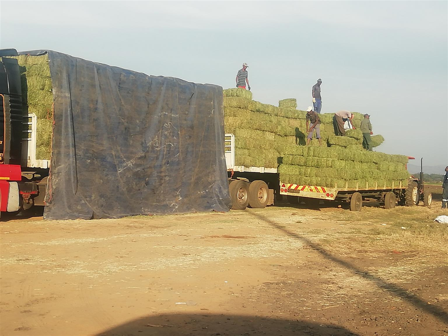 Grass and Lucerne Hay for sale