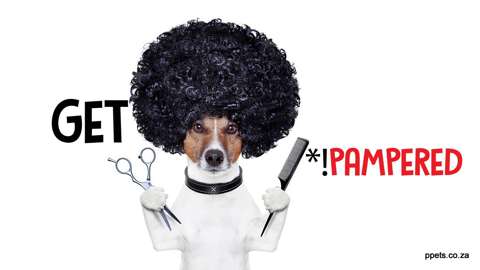 Pampered Pets East London's best Pet Shopand Grooming Salon