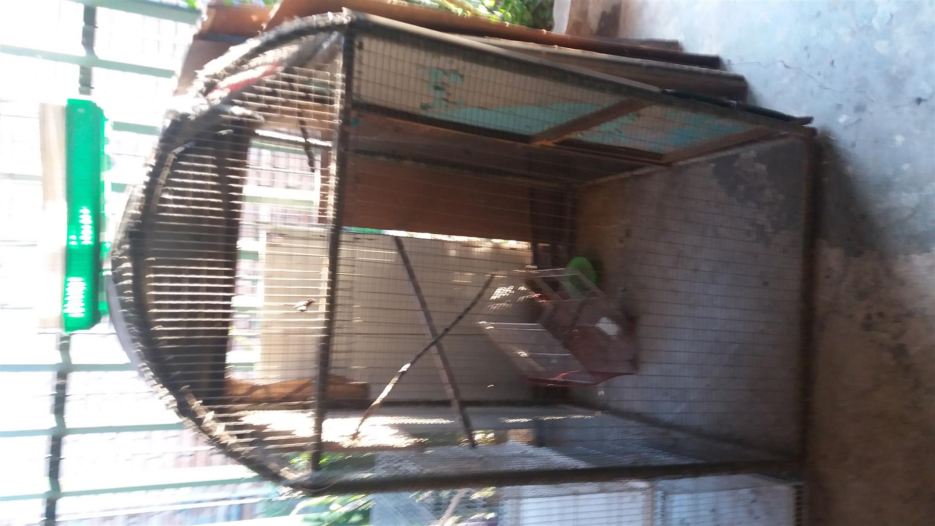 Big Cage1.4mx 1mx1mx1mx1m for paret or finches