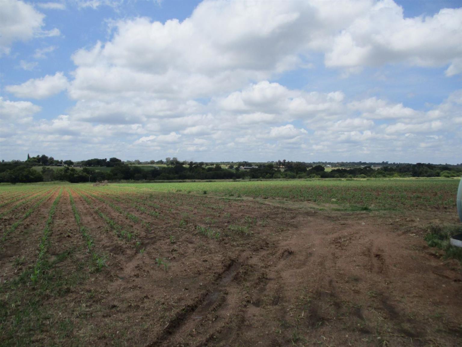 Farm For Sale in VASFONTEIN