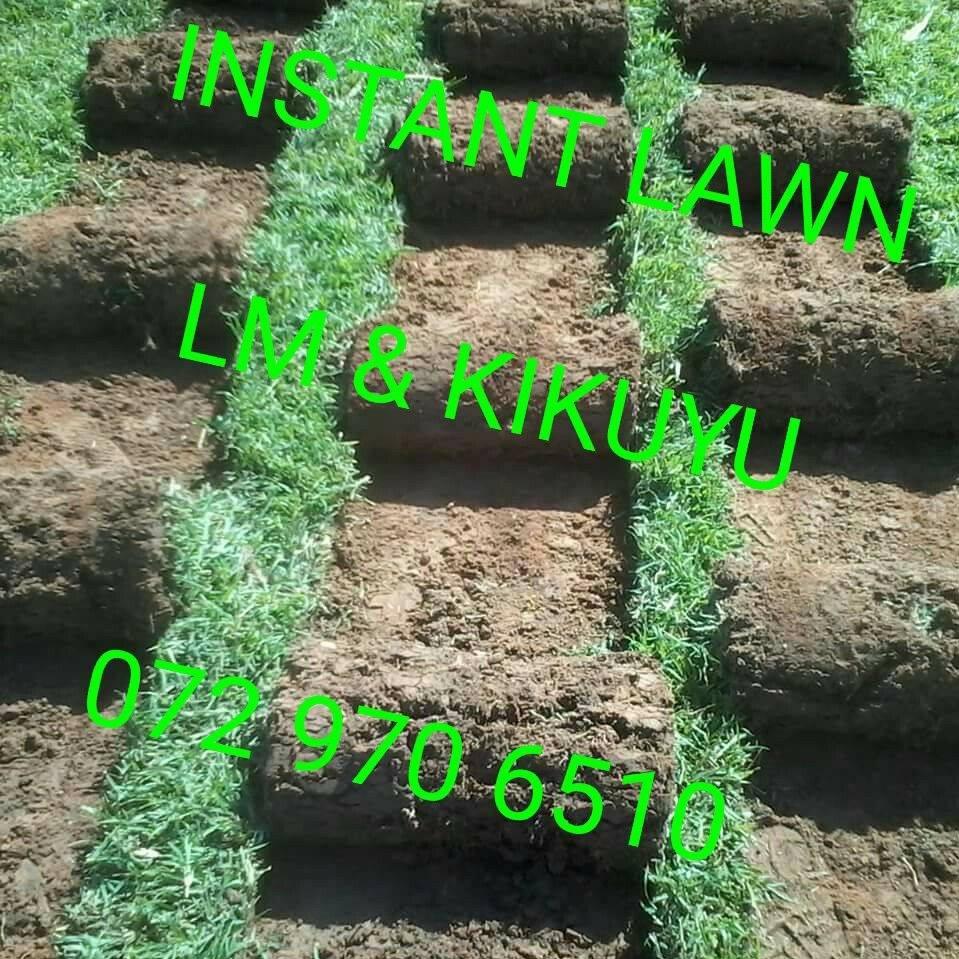 INSTANT LAWN :  LM & KIKUYU