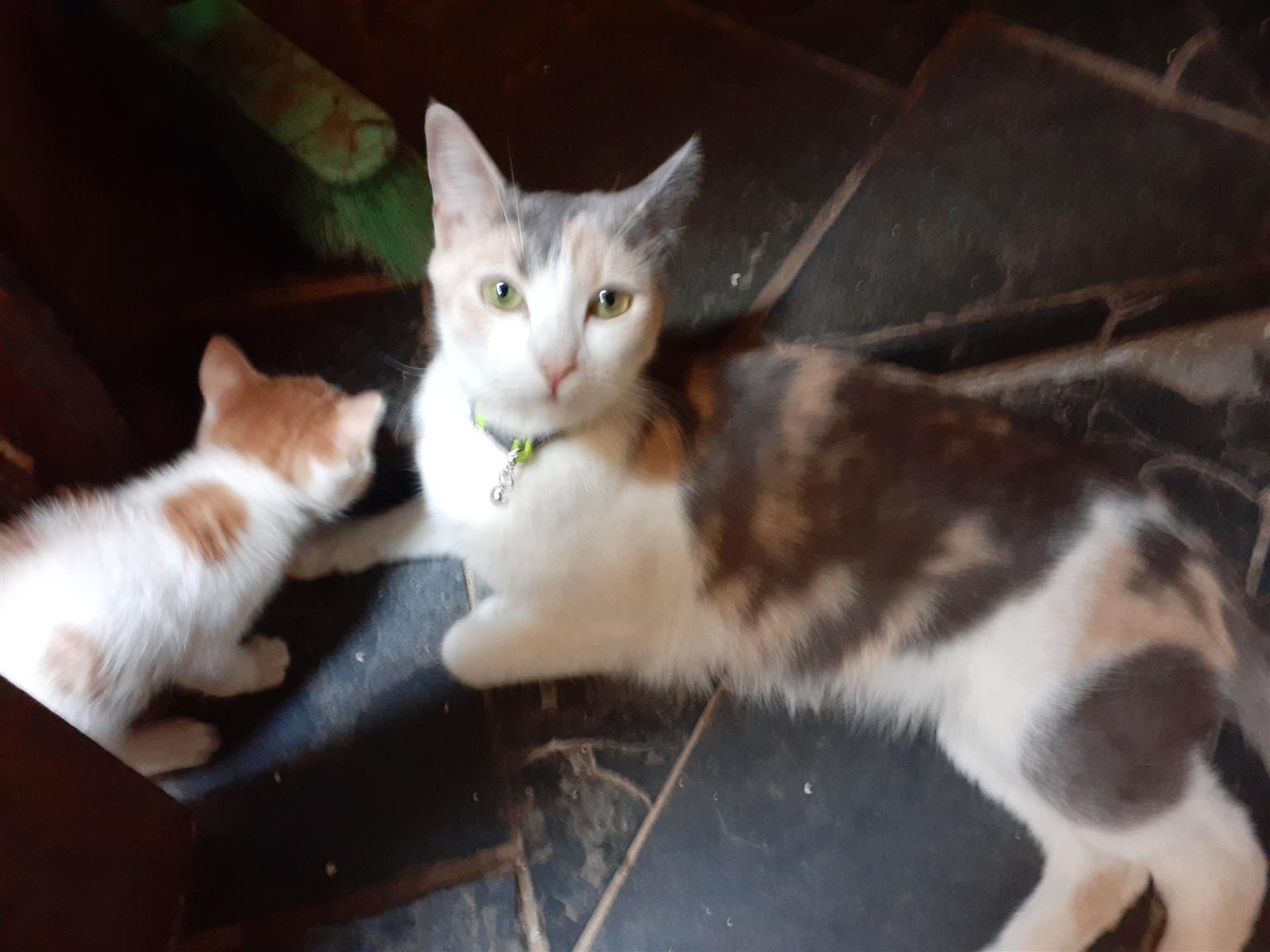 Kittens for sale born 25/09/2019