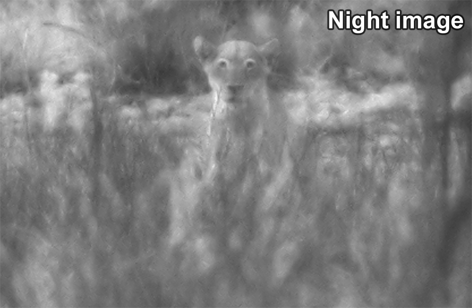 Digital night vision monocular - 6 x 50mm