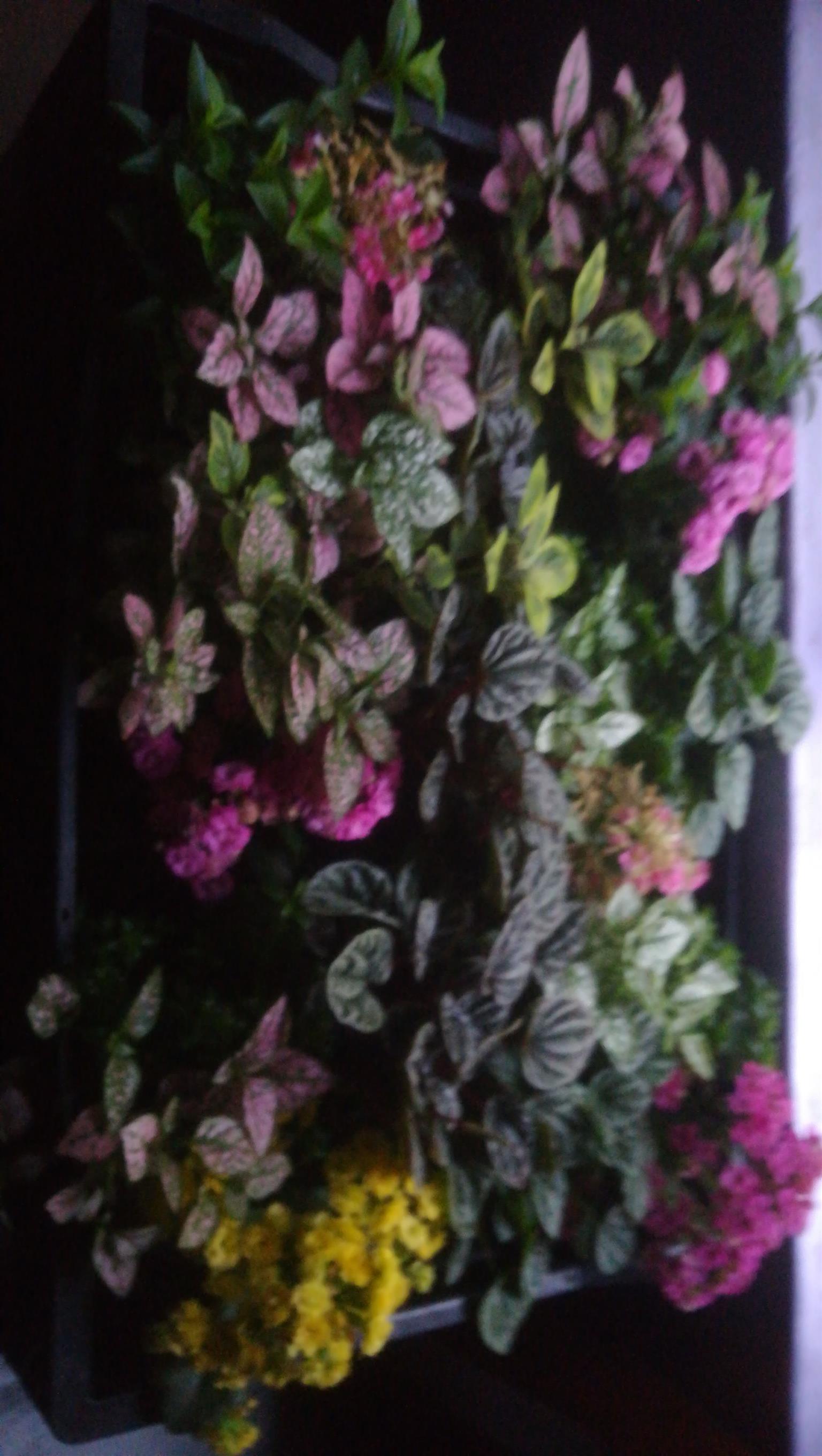 Plants pietermaritzburg