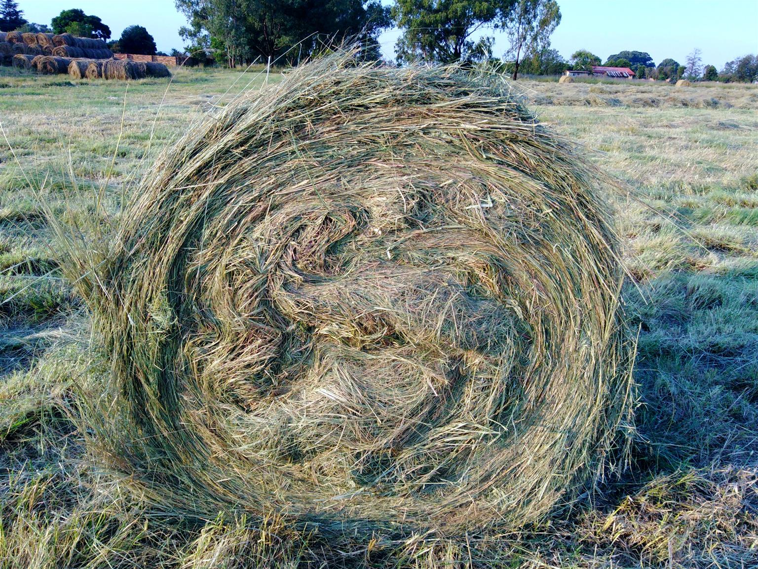 TEff BALES - rounds and squares