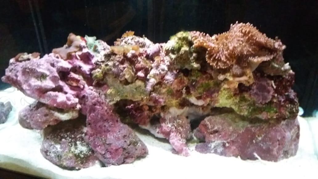 Marine Corals (various) and Fish