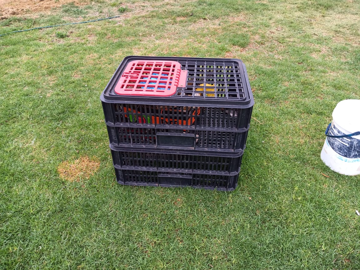 Chicken Crates for sale