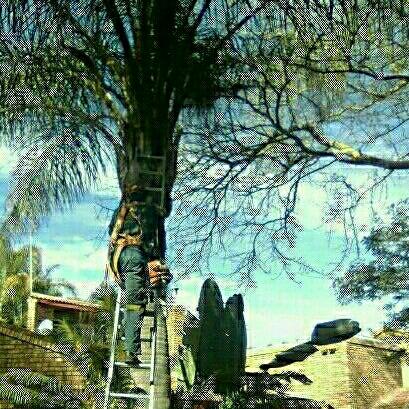 FM tree felling | Junk Mail