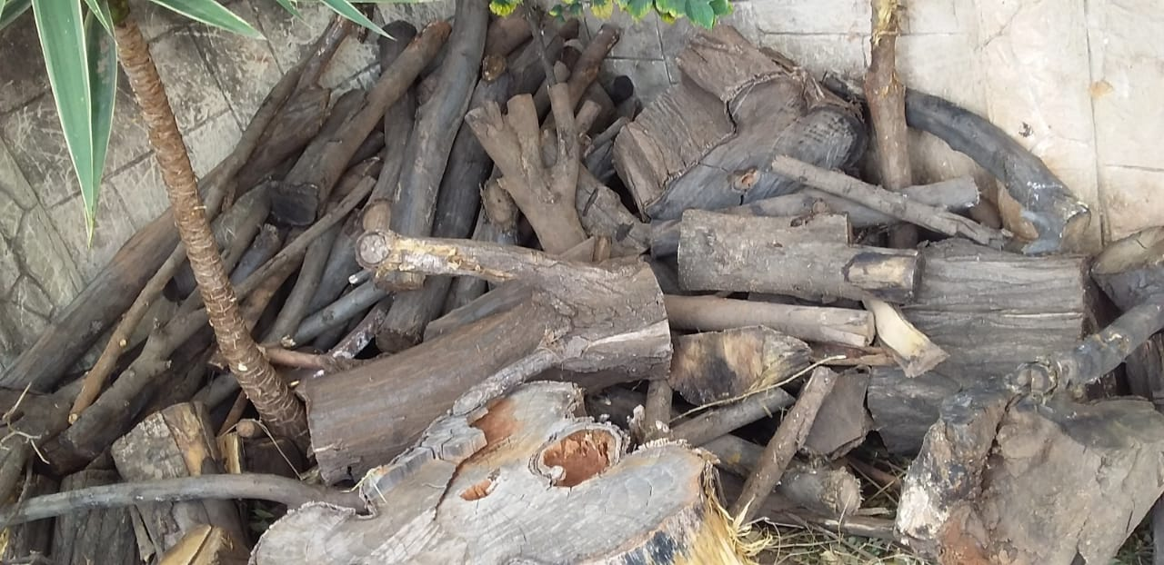 Fire Wood and Massive Logs For Sale